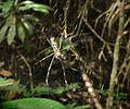 Aranhas no Parque Estadual Rio Doce.jpg