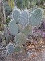 Arizona Cactus Garden 030.JPG