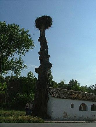 Kovilj - Image: Arkanj 016