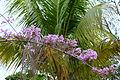 Around Amazonia (7958457716).jpg