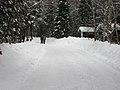 Arrowhead Provincial Park - skating trail.jpg
