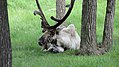 Assiniboine Park Zoo, Winnipeg (480485) (9445014083).jpg