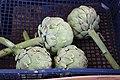 Asterales - Cynara cardunculus var. scolymus - 3.jpg