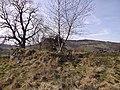 Auchenhove Castle mound.jpg
