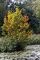 Autumn colors (15062740100).jpg