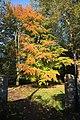 Autumn colours on Butten Island - geograph.org.uk - 1028760.jpg