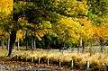 Autumn in the park. (18881047586).jpg