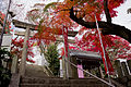 Autumnal colors of the leaves at Iwazu Temmangu Shrine.jpg
