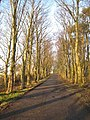 Avenue of trees - geograph.org.uk - 685221.jpg