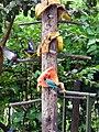 Aves brigando por comida - panoramio.jpg