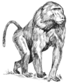 Baboon (PSF).png