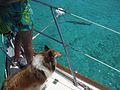 Baily Spots a Fish (3425514613).jpg