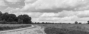 Balloërveld, natuurgebied in Drenthe 02.jpg