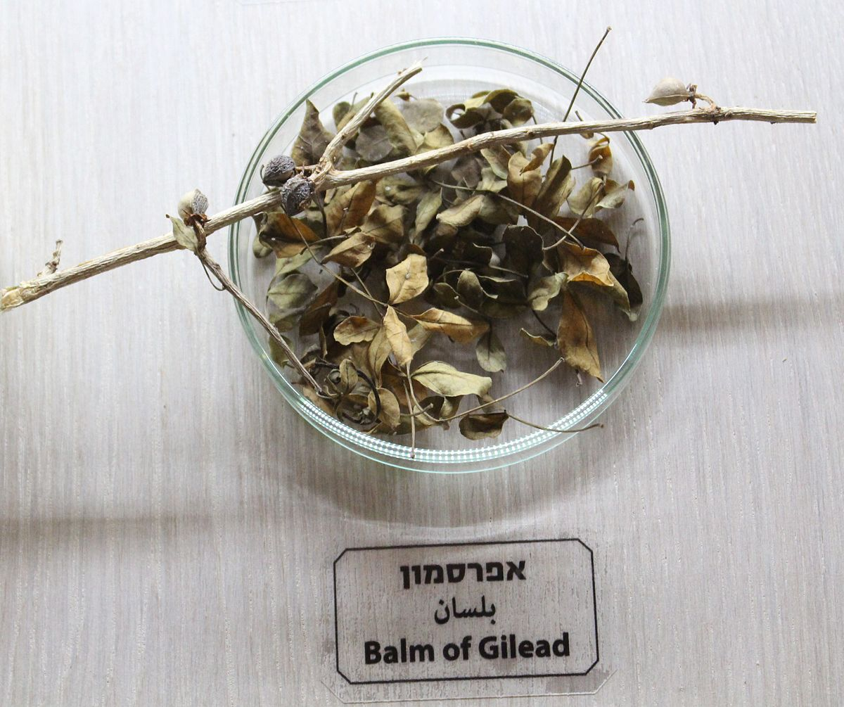 Balm Of Gilead Wikipedia