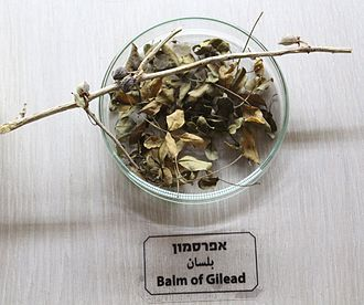 Balm of Gilead - Balm of Gilead, an exhibition at Jerusalem