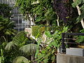 Barbican Conservatory on 7 Aug 2014 08.jpg