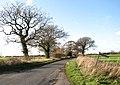 Bare oak trees growing along Semere Lane - geograph.org.uk - 1596056.jpg
