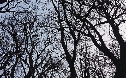 Trees in the winter.