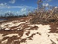 Beach berm habitat damage (23825394808).jpg