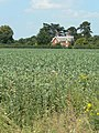 Bean field at Holme Pierrepont - geograph.org.uk - 1385921.jpg