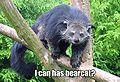 Bearcat.jpg
