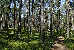 Beberbeķu Nature Park, July 2007.jpg