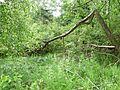 Beckenweiher-Uferbereich.jpg