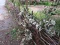 Beelitz Heilstätten -jha- 270998324290.jpeg