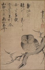 Owl (1988.35)