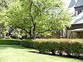 Beringer Vineyards, Napa Valley, California, USA (8308362419).jpg