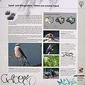 Berlin-Grunewald Sandgrube im Jagen 86 Informationstafel 1.jpg