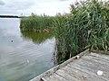 Berzyńskie Lake (pomost wedkarski).jpg
