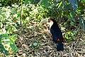 Beto Carrero Zoo - panoramio (29).jpg