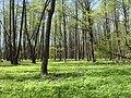 Bezhitskiy rayon, Bryansk, Bryanskaya oblast', Russia - panoramio (157).jpg