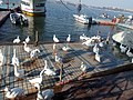 Bhopal lake view Duck Vision.jpg