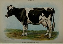 Biggle cow book; old time and modern cow-lore rectified, concentrated and recorded for the benefit of man (1913) (20181979460).jpg