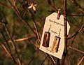 Bijoux Agrosylva Jewelry - Aged Sumac Earings.JPG