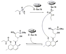 dapoxetine combined with viagra