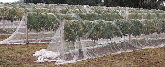 Netting: It's For the Birds | Raintree Nursery