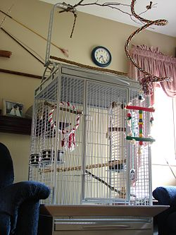 definition of birdcage
