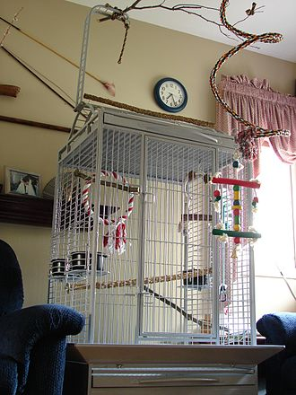 Birdcage - A cage designed for medium-large parrots, with a playtop.