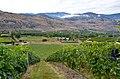 Black Hills Syrah - panoramio.jpg
