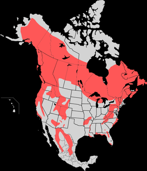 Range map of the American Black Bear (Ursus Am...