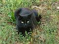 Black cat (10357272293).jpg