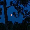 Blood moon over Brastad old cemetery.jpg