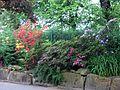Blumen in Zoo Dresden (2).jpg