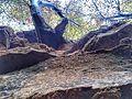 Bois de Clairefontaine - panoramio (12).jpg