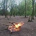 Bonfire in the woods.jpg