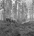 Bosbewerking, arbeiders, dieren, boomstammen, slepen, paarden, Bestanddeelnr 251-7983.jpg