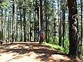 Bosque de Oma (18).JPG